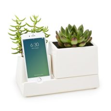 succulent phone dock desk gift